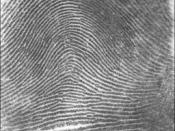 English: Picture of an arch fingerprint pattern. Image source: NIST. Category:Fingerprints