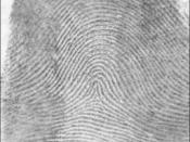 English: A tented arch fingerprint pattern.