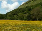 Meadows 6