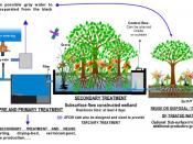 English: Schematic drawing from a typical sewage treatment plant via subsurface flow constructed wetlands (SFCW) for a productive and economical treatment and reuse of sewage and water.