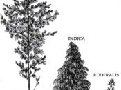 основные виды конопли