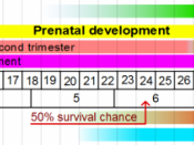 English: Stages in Prenatal development, with weeks and months numbered by gestation. Image made in Inkscape. References are found in equivalent Wikipedia articles: Fetus Gestational age Human development (biology) Pregnancy Prenatal development Viability