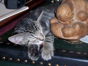 Zooey Sleeping, Buddha Weeping