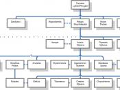 Genealogy of Agamemnon