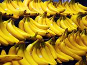 Cavendish bananas are the main commercial banana cultivars sold in the world market.