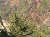Lucky Shot - California Condor