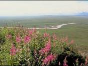 Photo of tundra vegetation on Alaska's coastal plain