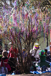 Mardi Gras bead tree, North Shore Louisiana. Some say that all the Mardi Gras beads in everyone's attic is the real reason New Orleans is sinking.