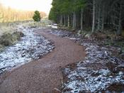 English: Mountain bike trail, Rivoulich New mountain bike trails laid out in Rivoulich Forest area.