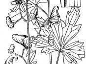 Southern Blue Monkshood (Aconitum uncinatum)