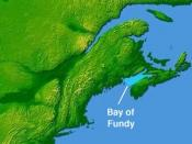 English: Bay of Fundy © 2004 Matthew Trump based on NASA image in public domain