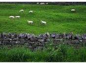 Dry stone wall / Rookhope