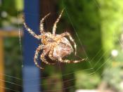 Garden spider, taken with FinePix A345