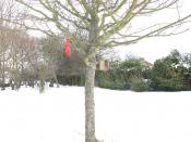 English: Bird feeders in the snow Someone has kindly put up these bird feeders on a tree in a public space (Walden Recreation Ground).
