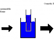 English: illustration of osmotic pressure