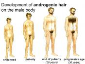 Development of androgenic hair (body hair) on the male body due to puberty