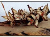 Seed capsules of Strelitzia nicolai