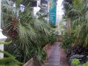 English: Interior of the Palm House at Edinburgh Royal Botanic Garden, Edinburgh.