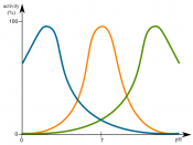 graph of enzyme activity in against pH. green- high pH enzyme; blue- low pH enzyme; orange- neutral pH enzyme.