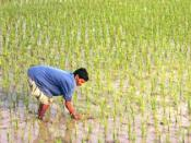 Man working in a ricefield.