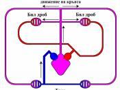 Circulatory-system-amphibians-bg