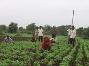 Weeds are removed manually in large parts of India.