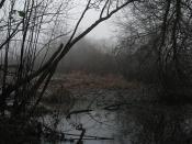 Wetland 03