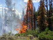 English: A fire in Yellowstone, Wyoming, United States.