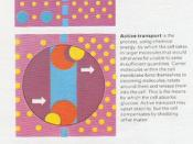 chemical equilibrium in the cell