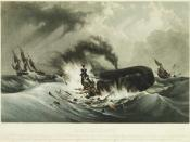 Whaling in small wooden boats with hand harpoons was a hazardous enterprise, even when hunting the