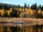 English: Upper Klamath Lake Canoe Trail; Populus tremuloides, fall foliage; Pinus ponderosa subsp. ponderosa; and Abies concolor