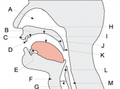 Phonological anatomy