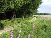 English: Summer on Egdon Heath The tract of heath and woodland south of Puddletown is characterised by Thomas Hardy as Egdon Heath. Indeed, it becomes a character in itself in