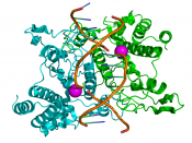 English: Based on the PDB crystallographic coordinates 1QPS.