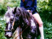 A bareback rider.