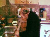 Change can be a  lonely, unsettling experience: Mrs Alice Nyari - getting used to her kitchen refit at The Bield in Selkirk