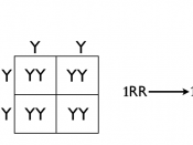 English: Homozygous cross tree method. Alternate method for dihybrid and multihybrid crosses