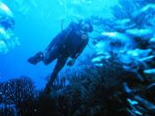 Scuba diver. Found at Plongée sous-marine & obt'd Image:Plongeur bouteilles.jpg id'd there as