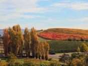 English: Fall in Napa Valley