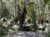 The Australian bush, a major influence and central subject matter for the Heidelberg School artists.