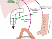 English: Diagram showing enterohepatic circulation of Bile Salts