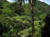 Montañas de la Sierra de Agalta, Olancho. Honduras. Photo by Dennis Garcia.