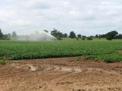 English: Crop irrigation The past few weeks have been unusually dry and in order for this year's crops to properly develop farmers are irrigating their fields.