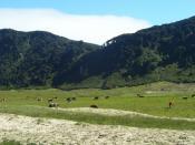 isla Mocha (Chile)