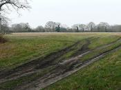 English: Sandleford Warren A footpath runs from Sandleford to Wash Common across this open area, which is managed for game shooting.