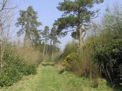 English: A track through Kipps Plantation