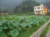 English: A village in Tongshan County, Hubei (between Tongshan town and Hengshitan Zhen, seen from Highway G106), with a large pond of lotuses (that's a useful food crop, too!) for the front yard, surrounded by a white picket fence.