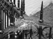 Cobwebs on fence