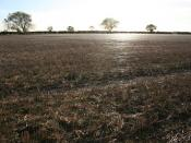 English: Shimmering cobwebs Stubble covered with millions of cobwebs shimmering in the low autumn sun