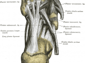List of images in Gray's Anatomy: III. Syndesmology